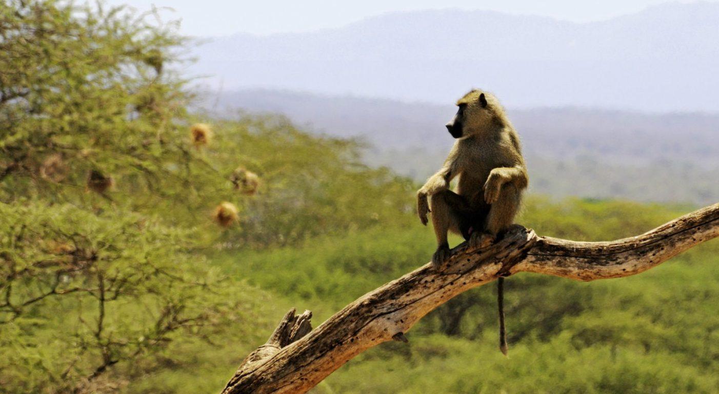 фото сафари кения