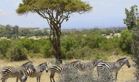 Сафари Кения