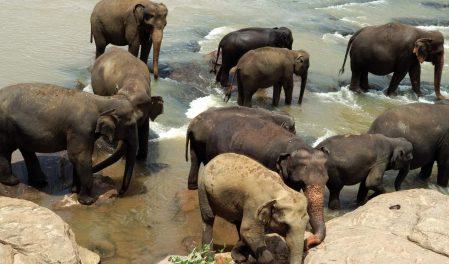 Екскурзия Шри Ланка
